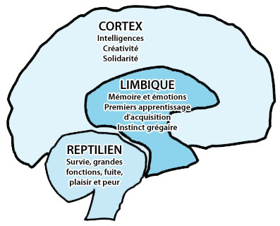 Cerveau interne